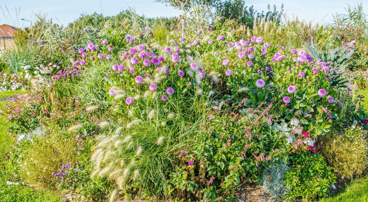 Purple flowers on a bush